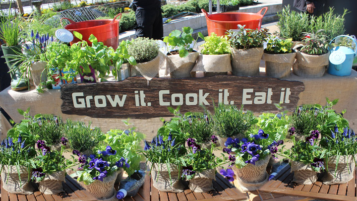 Green Tips For Your Garden Sustainability