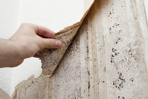 How Mold Can Affect Your Health And Your Property Value