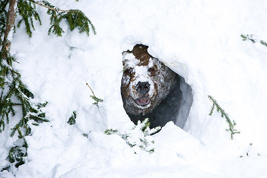 5 Steps To Successful Hibernating At Home This Winter