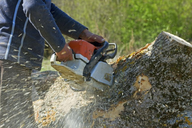 Few Important Things You Should Know About Stump Grinding
