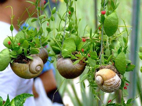 4 Best Eatable Indoor Plants To Grow