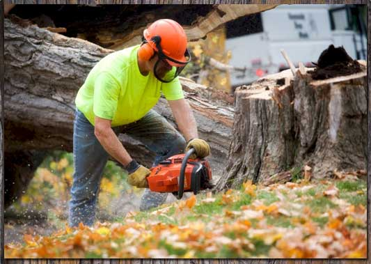 8 Questions To Ask A Tree Service Company