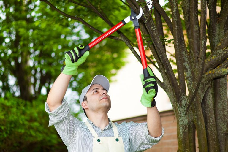 What Is The Best Time To Prune Your Trees?