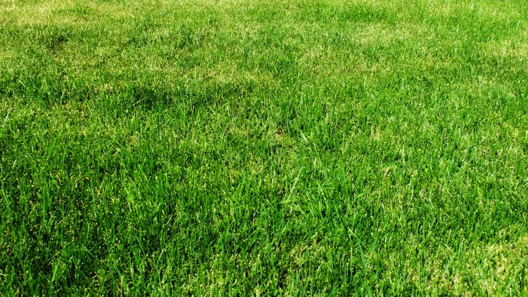 Artificial Grass Vs. A Lawn: Pros and Cons