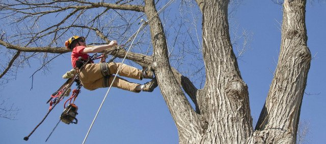 What Is An Arborist And Do You Need One?