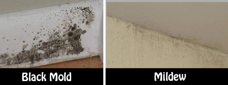 Warning Signs Of Mold