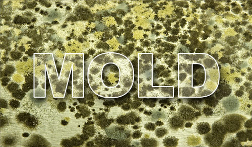 Top 3 Things Mold Needs To Grow
