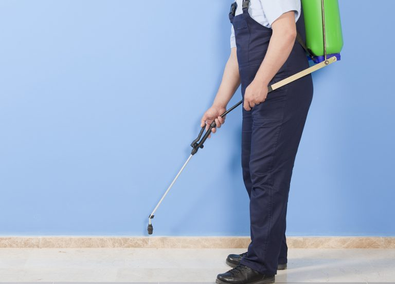 What Pest Control Service Should You Be Offered?