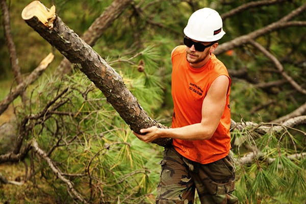 What You Need To Know Before Hiring A Tree Service Company