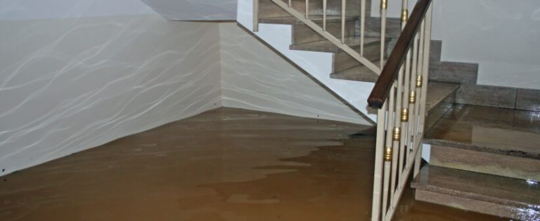 How To Prevent and Fix A Wet Basement