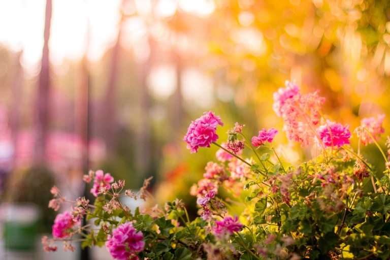 How To Prepare Your Garden For The Winter Months
